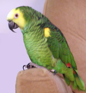 birdie122805.jpg