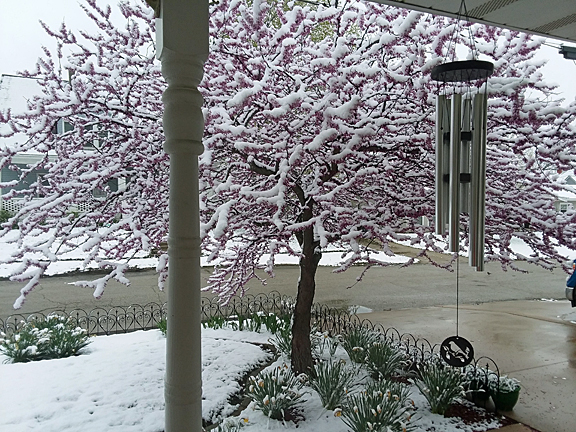 snow1.jpg
